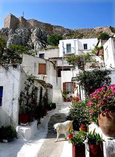 bohemianprohibition:    greek dog living a greek life.