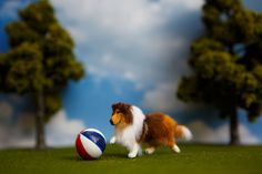 Dollhouse Miniature 1:12 Shetland Sheepdog OOAK