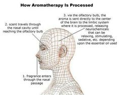 Young Living Essential Oils: Aromatherapy