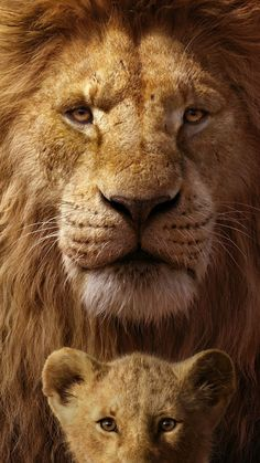 Mufasa & Simba In The Lion King Mufasa & Simba In The Lion King Ultra HD Mobile Wallpaper.You can find The lion k. Lion King Art, Lion King Movie, Lion Art, The Lion King, Simba Disney, Disney Lion King, Tier Wallpaper, Animal Wallpaper, Screen Wallpaper