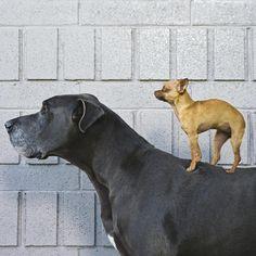 Como escolher uma raça canina