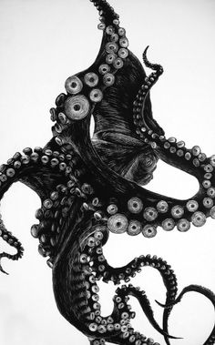 octopus, pen & ink