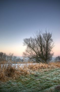 The colors of Winter? by jeremi12