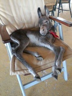 baby donkey rescued after mom gets hit by car Cute Baby Animals, Farm Animals, Animals And Pets, Funny Animals, Baby Donkey, Cute Donkey, Mini Donkey, Baby Cows, Donkey Rescue