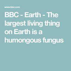 BBC - Earth - The largest living thing on Earth is a humongous fungus