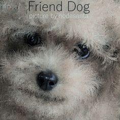 愛犬ティアモのお友達犬をお絵描きしました。