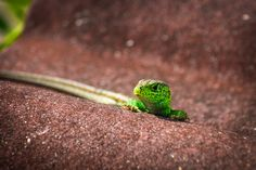 Look who's watching...this green lizard wanted to catch some sun...