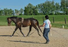 Safe Longeing - TheHorse.com |  This common exercise modality can be surprisingly risky; learn how to keep your horse--and yourself--safe.