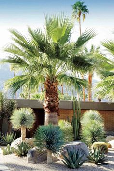 A dry garden in California's Coachella Valley, designed by Marcello Villano, pairs fan palm and golden barrel cactus with varieties of yucca and aloe. See more in Required Reading: Succulents, The Ultimate Guide. Photograph courtesy of Succulents. Succulent Landscaping, Tropical Landscaping, Front Yard Landscaping, Landscaping Ideas, Landscaping Software, Modern Landscaping, Palm Trees Landscaping, Tropical Garden Design, Dry Garden