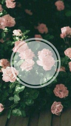 Wallpaper Backgrounds, Iphone Wallpaper, Shwan Mendes, Autumn Aesthetic, Instagram Story Template, Instagram Highlight Icons, Story Highlights, Background Templates, Flower Frame
