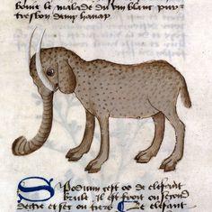 cloven-hoofed elephant  Livre des simples médecines, France 15th century  BnF, Français 623, fol. 165v