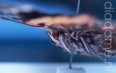 Vlinder closeup