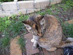 Davinci Likes our garden.