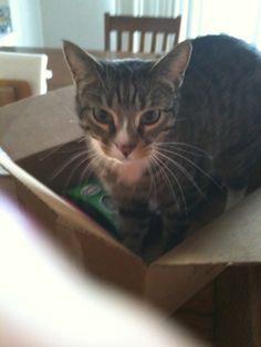 Frankie in a box