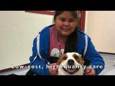Reno Nevada, Veterinary Care, Clinic