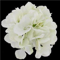 Hobby lobby for center piece. Fresh Picked White Hydrangea