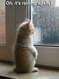 Rain..... oh Portland