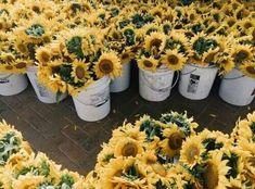 Картинка с тегом «flowers, yellow, and sunflower