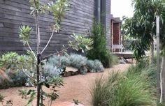 Organic Kitchen Gardening By Maitri Mehta Garden King, Bush Garden, Dry Garden, Small Courtyard Gardens, Small Gardens, Outdoor Gardens, Modern Australian Garden, Australia Landscape, Coastal Gardens