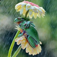 27 superb images from the National Geographic Traveler Photo Contest Frog BFF's huddle under their daisy umbrella! Animals And Pets, Baby Animals, Funny Animals, Cute Animals, Beautiful Creatures, Animals Beautiful, Beautiful Cats, Tier Fotos, Mundo Animal