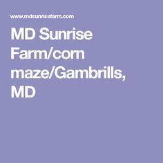 MD Sunrise Farm/corn maze/Gambrills, MD