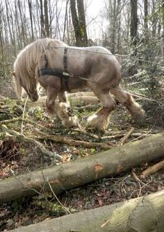 Horse, powerful Logger At Work. Please also visit www.JustForYouPro… for colorful-inspirational-Prophetic-Art and stories. Big Horses, Work Horses, All About Horses, Horse Love, Horse Girl, Black Horses, All The Pretty Horses, Beautiful Horses, Animals Beautiful