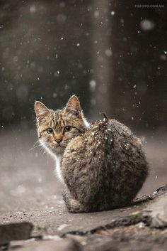 cat in the snow