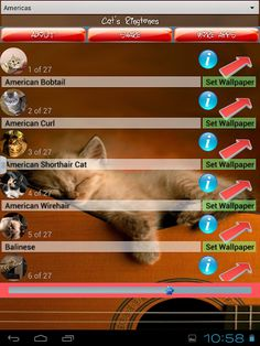 Fantastic cat world application with coolest cat ringtones for your entertainment and even education! Check out all cat's breeds, find out how they sound, how are they looking and interesting short info like orgin country, size and color of a kitten. We have categorize kitties by country of orgin:<br>- Americas: american bobtail, american curl, american shorthair cat, american wirehair, balinese, bengal, bombay, california spangled cat, cymric, exotic shorthair, himalayan, javanese, laperm…