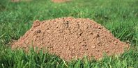 How to Get Rid of Ground Moles With Dawn Soap | eHow