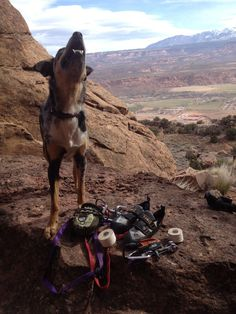Some good advice from @highsteph on taking your pup on the road with you for a #climb trip!
