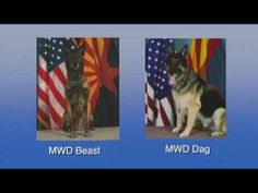 Fort Report Military Working Dog Memorial Service