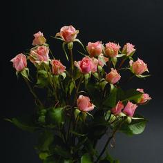 Sweet Sensation #RosesColombia #RedilRoses #ColombianFlowers #Roses #BlomFlores #Regalos