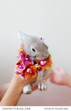 Little bunny with orchids | Photographers: Yolandé Marx, Flowers & Styling: Heike from Fleur Le Cordeur