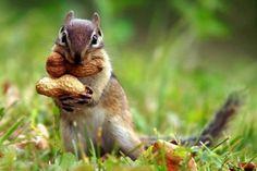 Tips voor een diervriendelijke herfsttuin - Lifestyle NWS