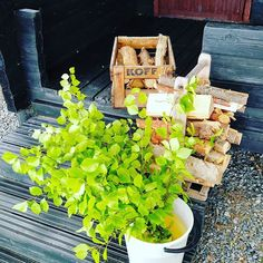 Ready to heat our summer sauna at Lake Souru in Finland countryside. Woodheated stonebase takes it's time but I'm not in hurry. Summer Scenes, Scandinavian Food, Vacation Destinations, Finland, Countryside, Sweden, Countries, Around The Worlds, Spring Summer