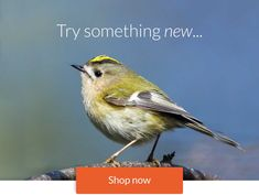 Get free Outlook email and calendar, plus Office Online apps like Word, Excel and PowerPoint. Sign in to access your Outlook, Hotmail or Live email account. Bird Food, Try Something New, Animals, Animales, Animaux, Animal, Animais