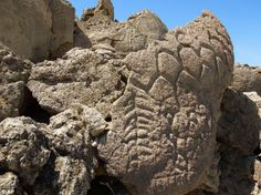 Petroglyphs, which date back at least 10,000 years, have been found on limestone boulders near Pyramid Lake in northern Nevada's high desert #GeorgeTupak
