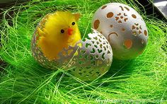 Openwork eggs and chick