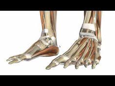 AnatomyZone | Fascia and Retinacula of the Foot • • AnatomyZone