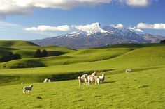 Custom New Zealand tours & trips to New Zealand with Kensington Tours. Enjoy a private guide during your vacation in New Zealand. See Auckland, Queenstown, Moun Oh The Places You'll Go, Places To Travel, Travel Destinations, Places To Visit, Vacation Places, Vacations, New Zealand Tours, New Zealand Travel, Travel Information