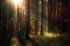 An autumnal forest in Baden Wuerttemberg, Germany