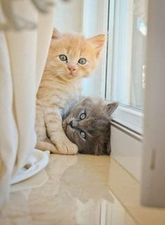 #Cute #Cutepics #Cuteanimalsphotos Kittens And Puppies, Cute Cats And Kittens, Kittens Cutest, Kittens Playing, Pretty Cats, Beautiful Cats, Animals Beautiful, Animals And Pets, Baby Animals