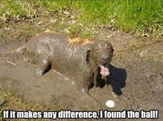This Dog is Gonna Need More than Soap | Mega Memes LOL!