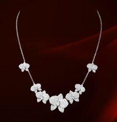 Cartier.  (A stem of Phals.)
