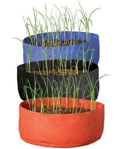 Grow garlic - plant cloves of garlic in fall - harvest in summer.  Each clove produces a head of garlic.