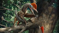 A newly discovered pterosaur that lived during the Jurassic Period could have used its flexible digits to climb trees like a monkey.