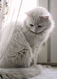 every cat is prettier than humans 10 Cats That Are Prettier Than Most Humans