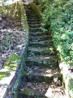 Moss covered steps.  Taken in the Dandenong Ranges, Victoria, Australia