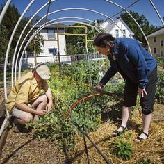 Homestead Hamlets: Neighborhood Gardens That Create Community Food Security - Homesteading and Livestock - MOTHER EARTH NEWS