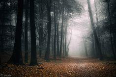 Dark Fall by tvurk on DeviantArt